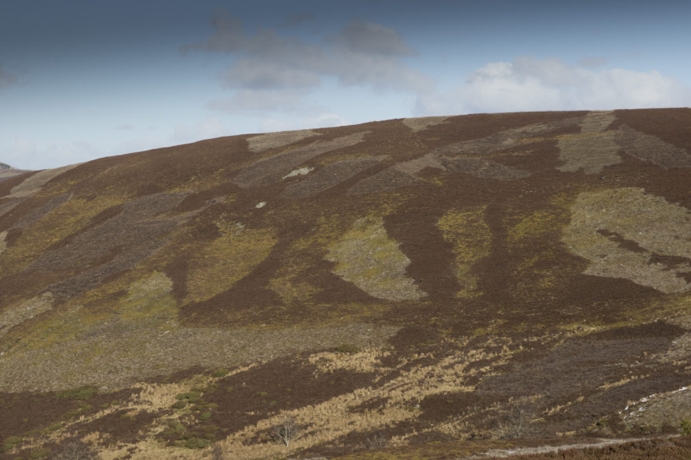 Hill with muirburn patches